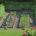 haricots Photo credit Distant Hill Gardens via Visualhunt.com CC BY-NC-SA