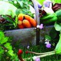 panier de légumes du jardin