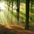 AUT_foret_sous bois_automne