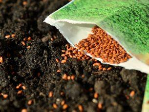 seeds-1302793_1280
