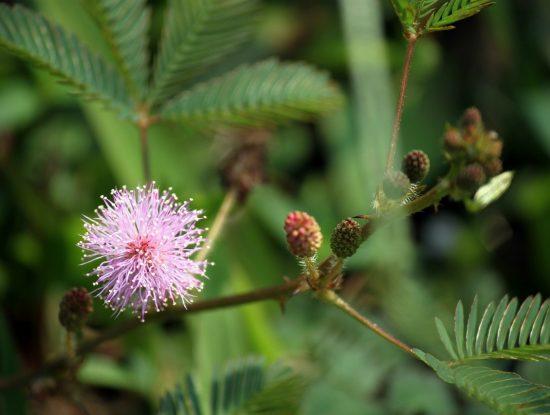 wildflower-214183_1280