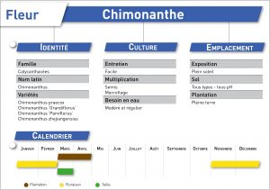 chimonanthe