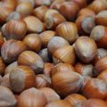 noisettes noisetier hazelnuts-1339881_1280