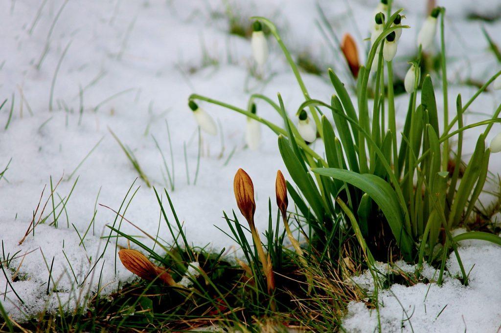 neige jardin hiver