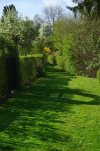 meadow-324387_1280