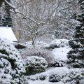 winter neige