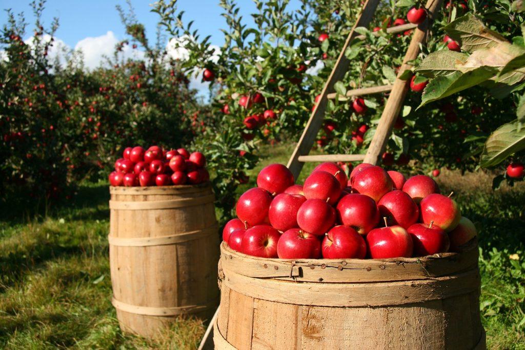 orchard-1872997_1280