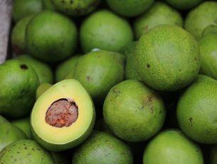 avocado-2742200_1280