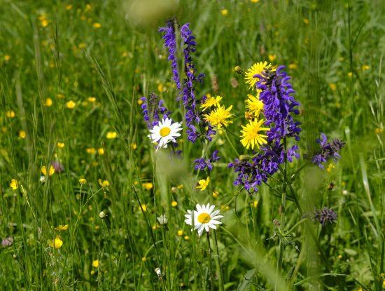 Une belle prairie fleurie !