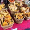 champignons comestibles de France