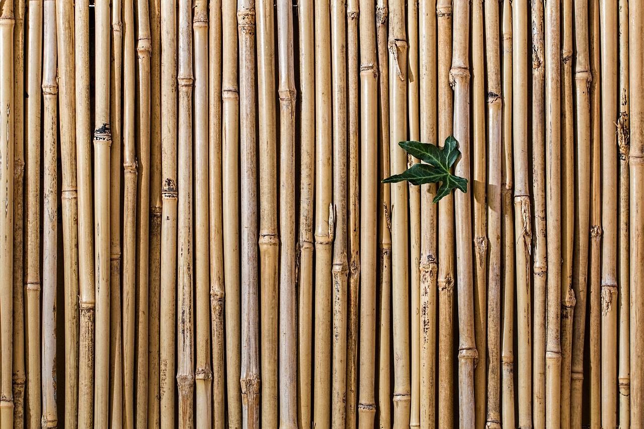 Fabriquer Un Brise Vue Bois diy du bambou en folie | blog oleomac