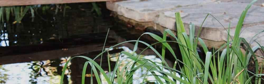 comment cr er un bassin naturel au jardin blog oleomac. Black Bedroom Furniture Sets. Home Design Ideas