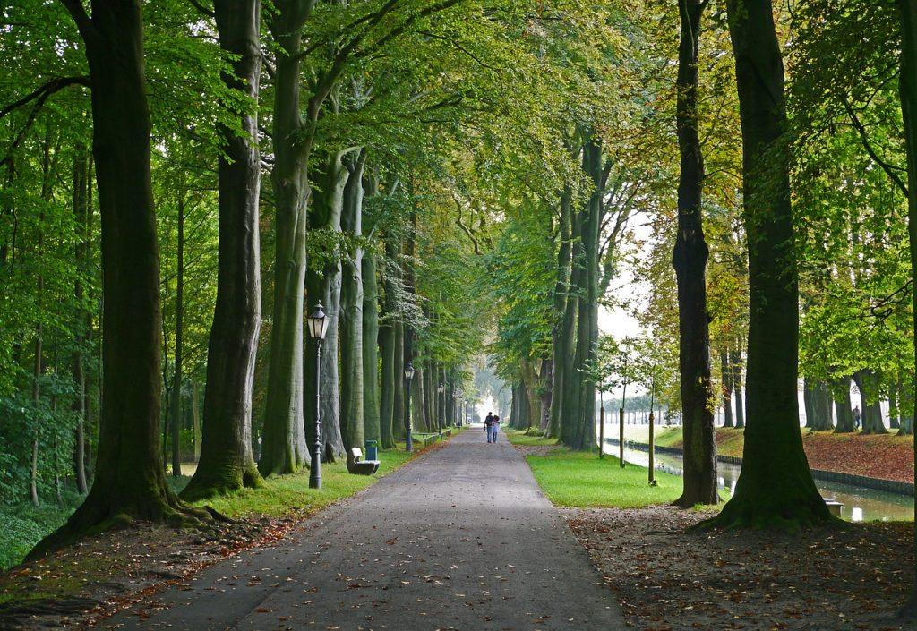 allee arbres Versailles Alain Baraton