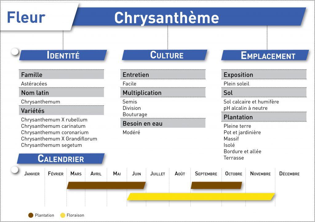 fiche telecharger chrysantheme