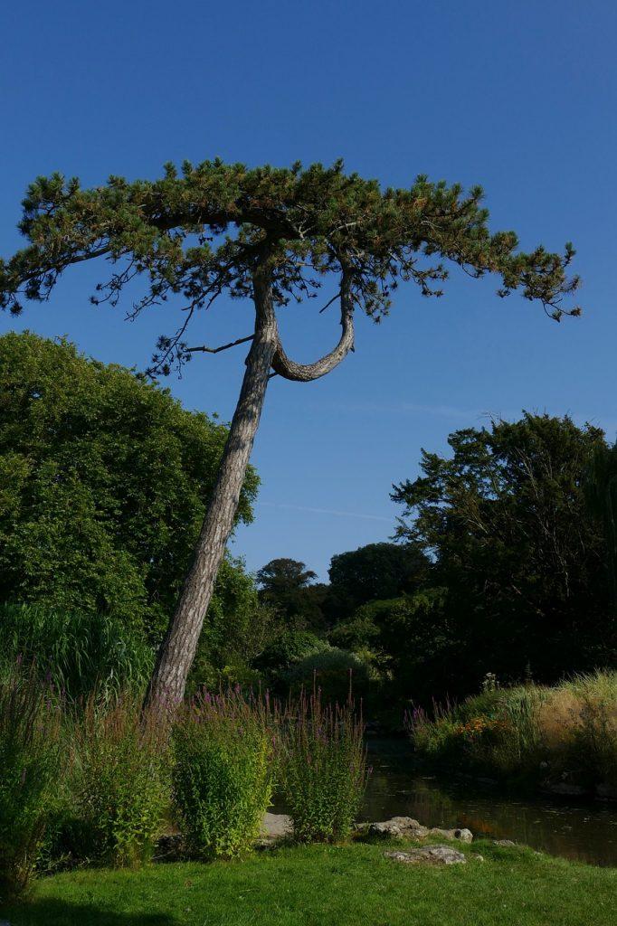coniferes jardin