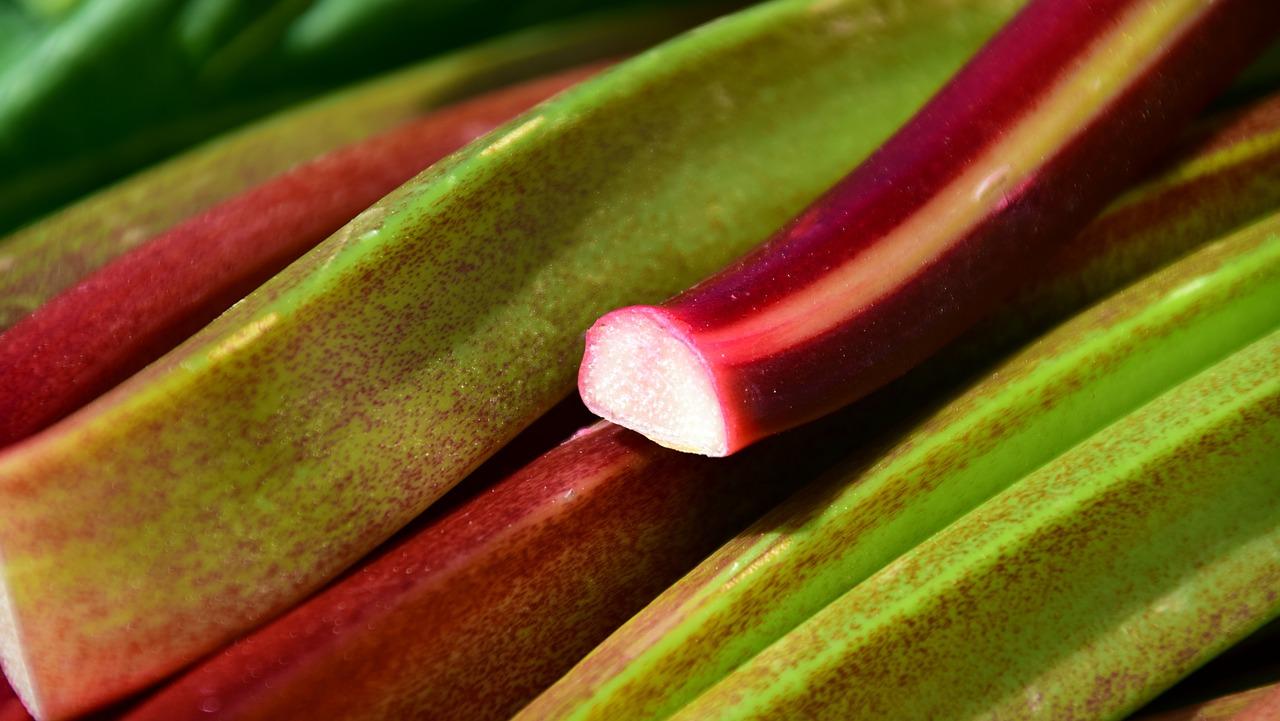 Culture Et Entretien De La Rhubarbe en novembre, dernière chance de planter la rhubarbe | blog