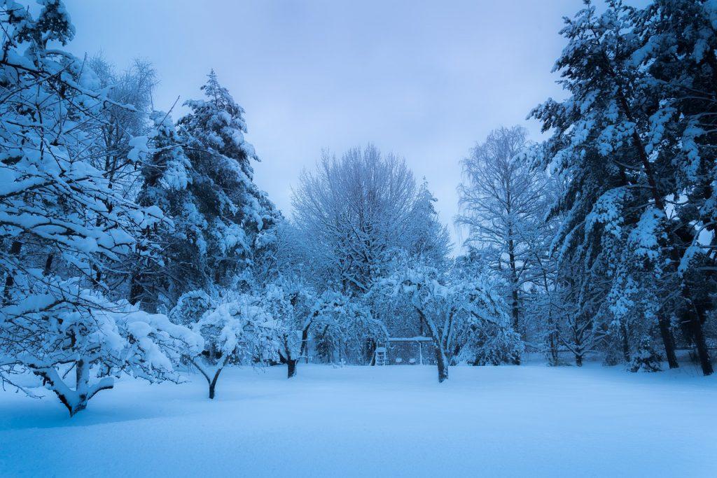 décembre neige verger