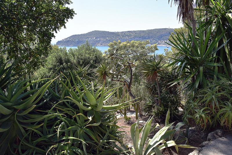 oleomac jardin mexicain aloes jardins Ephrussi