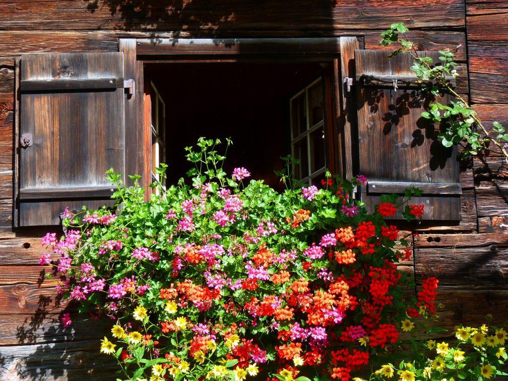 geranium balcon jardiniere oleomac