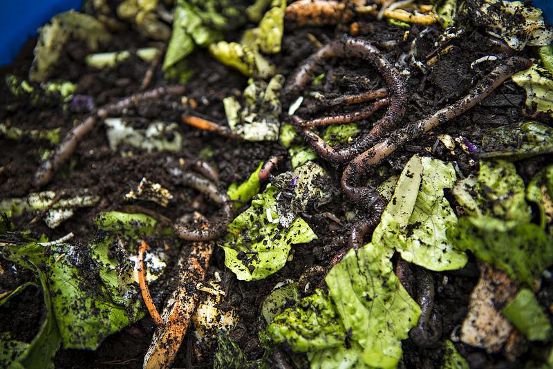 ver de terre compost oleomac