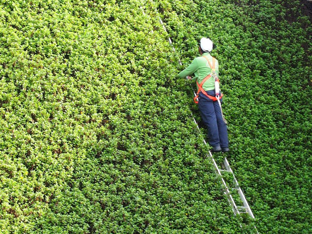 travailler en hauteur oleomac echelle vert