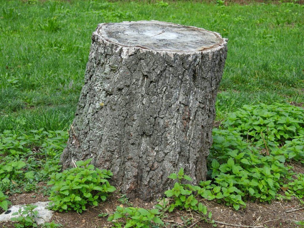 souche arbre oleomac
