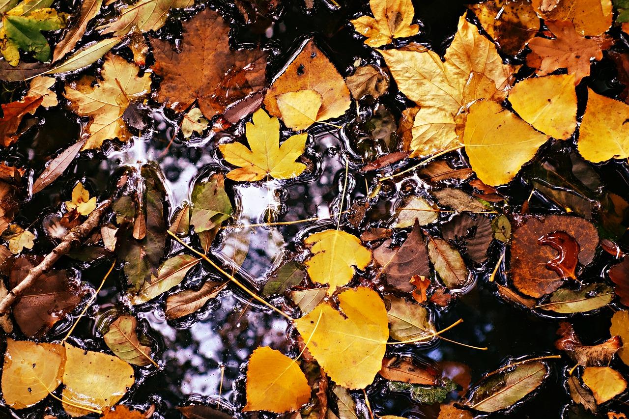 Compost De Feuilles D Érable les feuilles mortes, une excellente contribution dans le