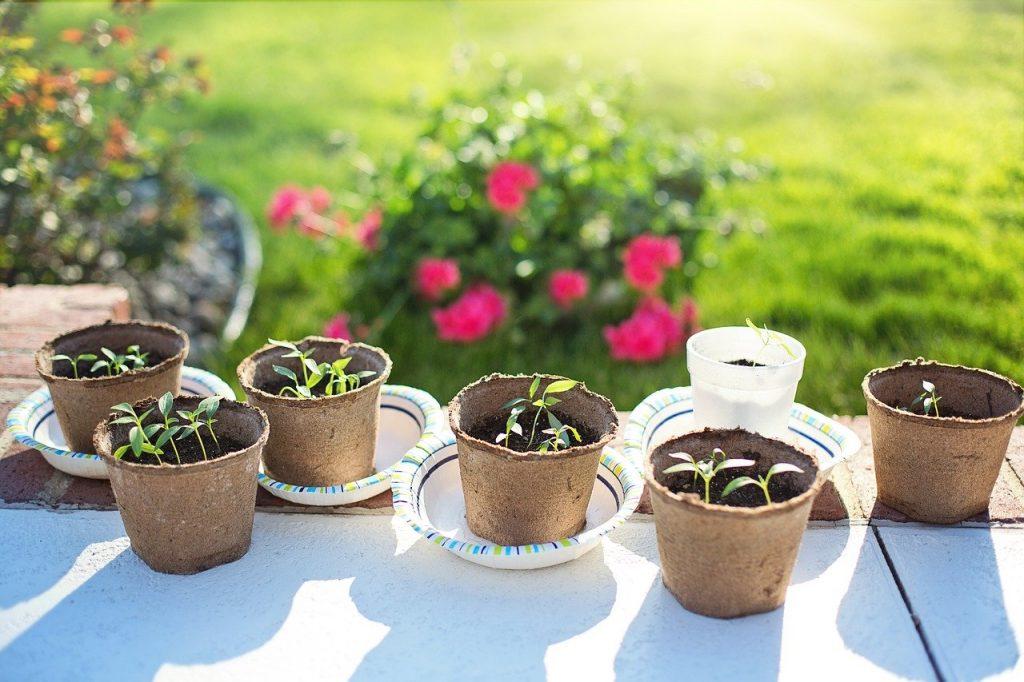 réaliser ses plants de légumes