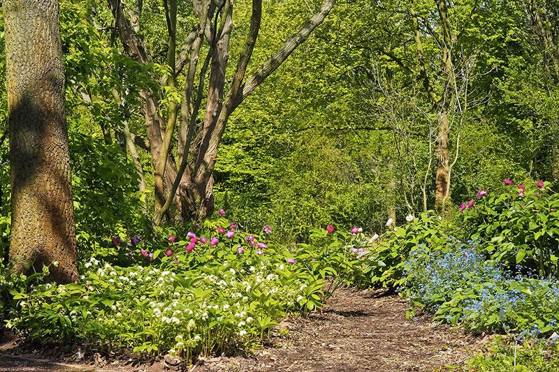 jardin naturel arbres plantes