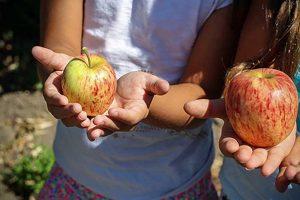 enfant pomme recolte