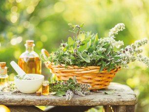 plantes-utiles-systeme-immunitaire