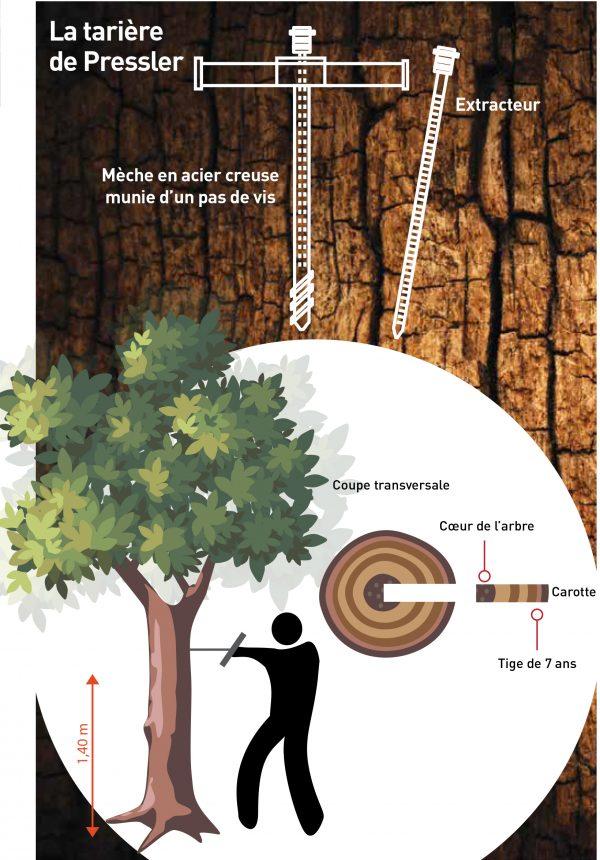 Comment déterminer l'âge d'un arbre ? tariere pressler