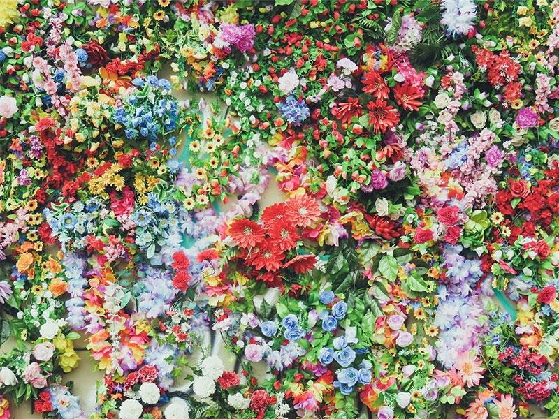 Fleurs_varietes_couleur