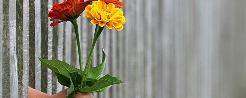 Main_fleurs_bouquet_cadeau