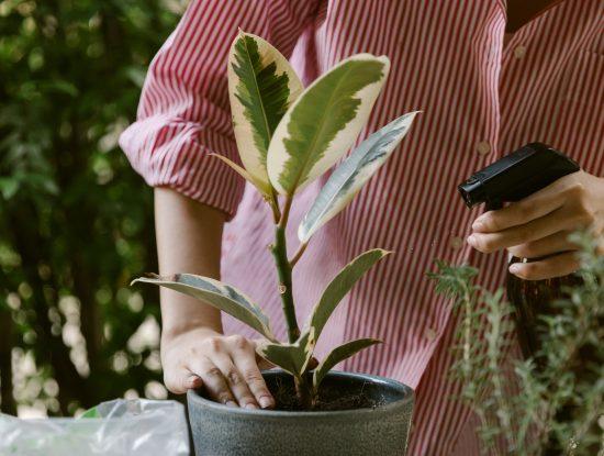 Vaporisateur plante