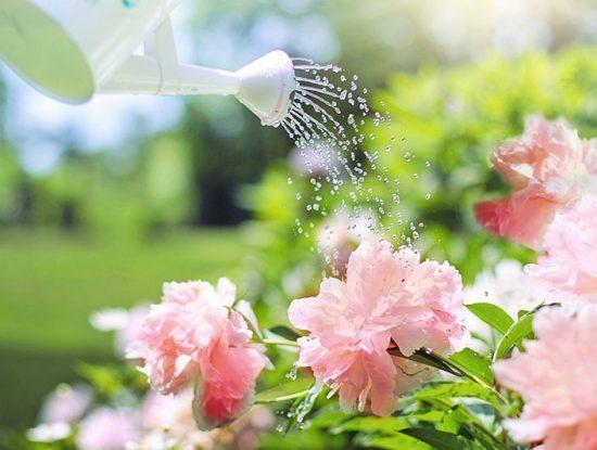 arrosage_jardin_blog