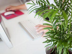 plante-verte_bureau