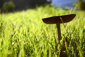 jardin_champignons