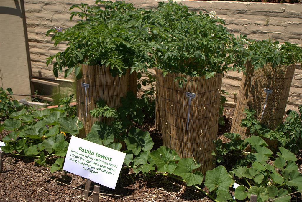 Tour pomme de terre permaculture-Photo credit Ed Bierman via Visualhunt CC BY