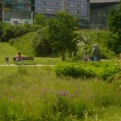 Parc-Matisse-Lille-Jardin-en-mouvement