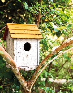 mangeoire oiseau abri